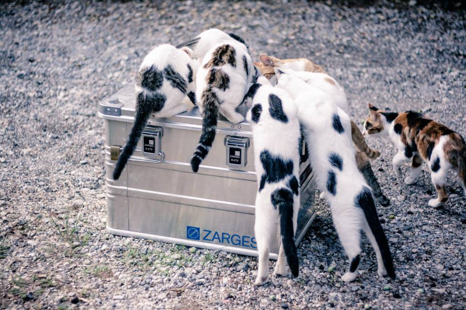 zarges_cats_1.jpg